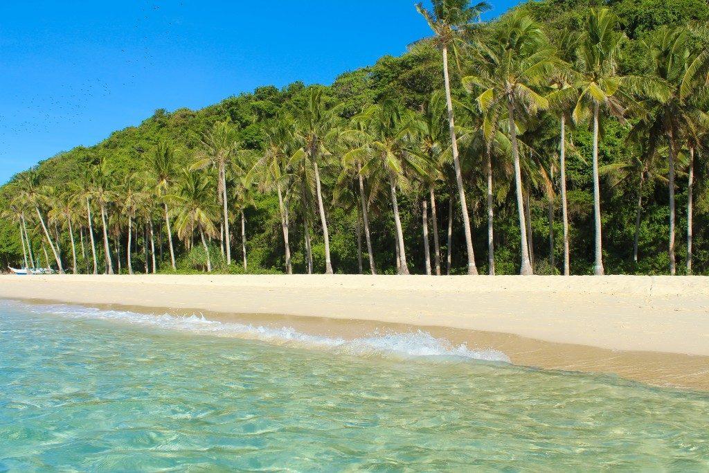 palm trees at changi beach
