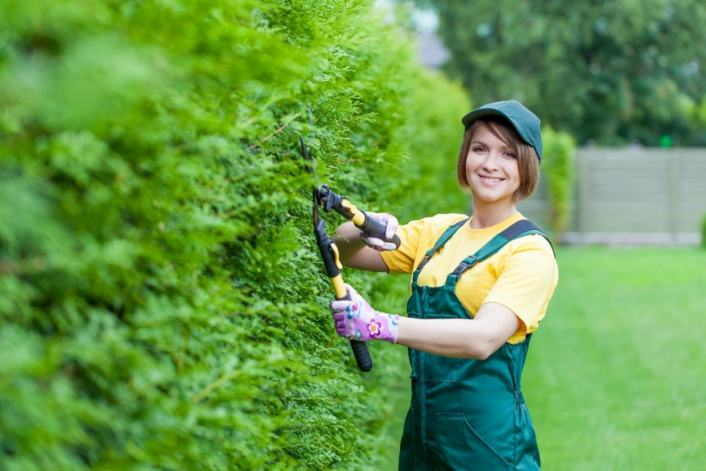 woman trimming hedge using shears